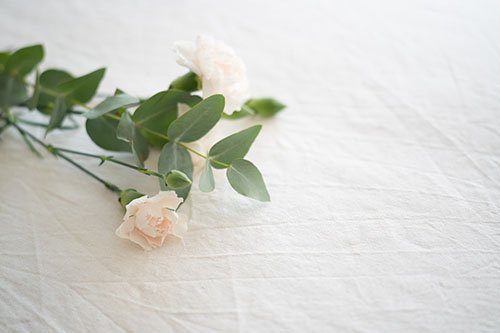 White rose on a sheet